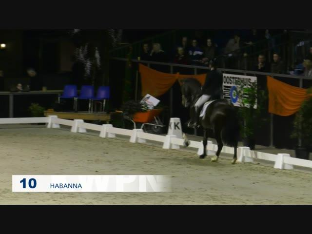 10 - Habanna