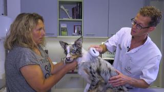Quality Time op Zondag | 15.5 | Milbemax | Hond Paige bij de dierenarts