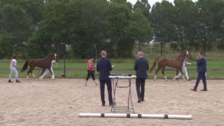 KWPN Stamboekkeuring Sliedrecht- 4 t:m 7 jarige vb merries tuigpaard (031-032-033-034-035)