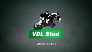 VDL Stud Online Stallionshow part 2  - ENG