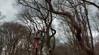Bomen bos Ermelo krijgen tweede leven bij de Botterstichting Harderwijk