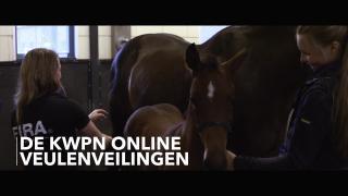 Bied mee op de KWPN Online Veulenveiling