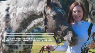 Bryer Horse Dani Bulletin