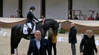 Prijsuitreiking Hengstencompetitie Kronenberg dressuur - Klasse L