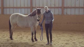 JA Horsemanship Spanish Walk ✨ Horse Training Tutorial
