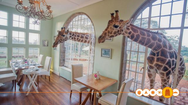 Giraffe Manor in Nairobi, Kenia