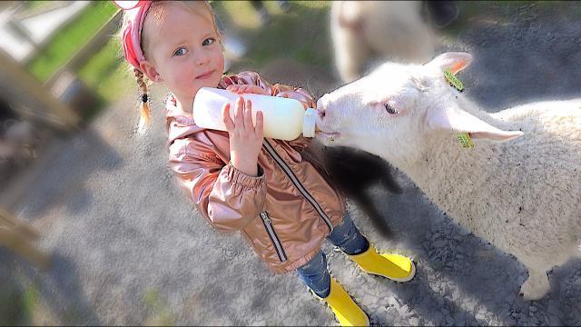 LAMMETJES DE FLES GEVEN  ( avonturen boerderij) | Bellinga Familie Vloggers #1325