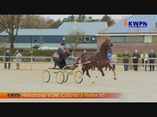 Heliotroop VDM