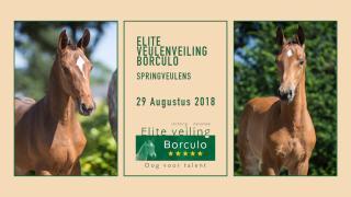 Elite Veulenveiling Borculo - Springveulens