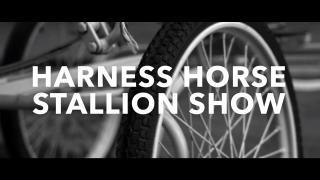 Harness Horse Stallion Show - Promo