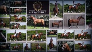 Alexandro P