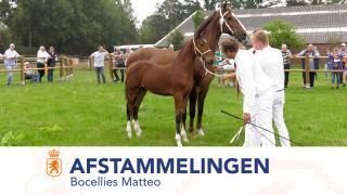 Afstammelingenkeuring Tuigpaarden Bocellies Matteo