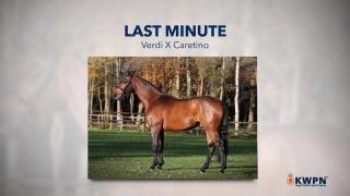 28. Last Minute