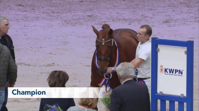 Kampioenskeuring Gelders Paard 2019
