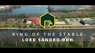 Lord Sandro DDH