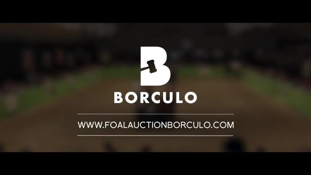 Foal Auction Borculo - An eye for talent