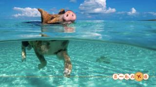 Zwem in de zee met varkens