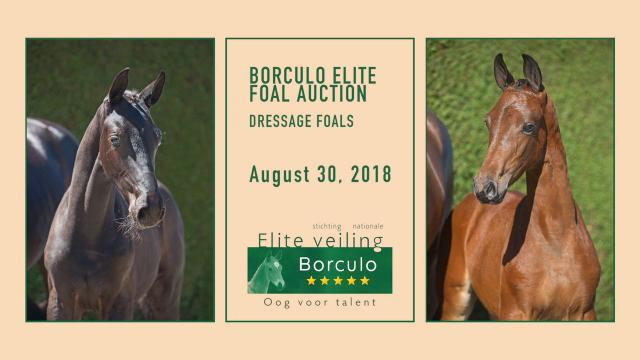 Elite Foal Auction Borculo - Dressage Foals