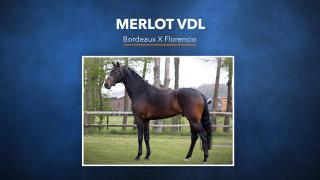 45. Merlot VDL